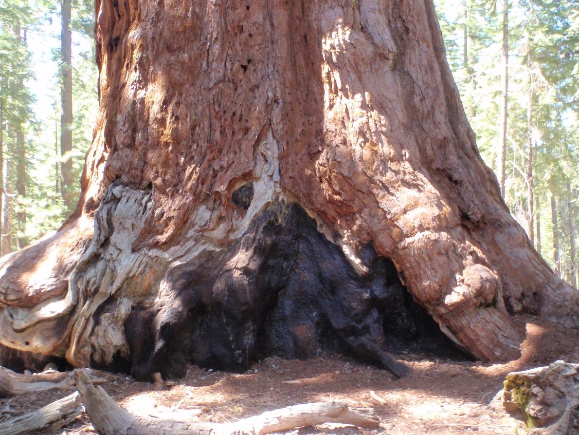 Trees 17